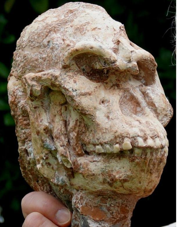 Mousterian Stone Tools Bradshaw Foundation