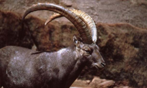 The symbol of the horned ibex was possibly related to how alloys were used and made. (Teacoolish / CC BY-SA 3.0)