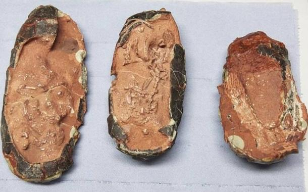 The three oviraptorid eggs studied by scientists at the University of Bonn and the TU Munich.