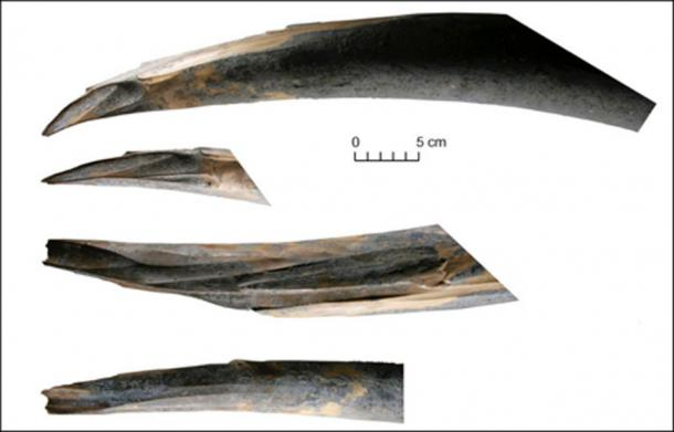 The traces of human interference on the tip of the right tusk of Sopkarginsky mammoth (Zhenya). Image: Vladimir Pitulko