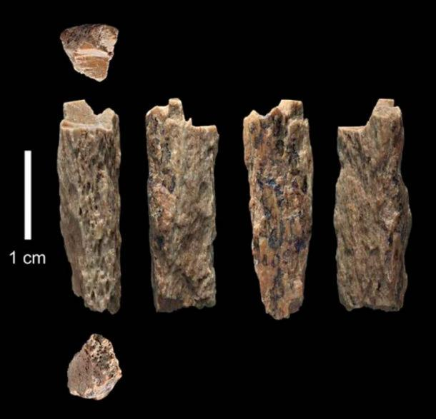 This bone fragment ('Denisova 11') was found in 2012 at Denisova Cave in Russia by Russian archaeologists and represents the daughter of a Neanderthal mother and a Denisovan father. ( T. Higham/ University of Oxford )