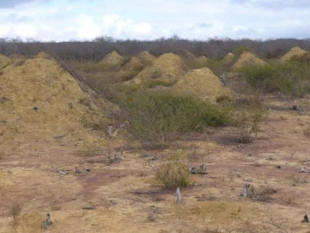 This image shows mound fields. The mounds are found in dense, low, dry forest caatinga vegetation and can be seen when the land is cleared for pasture. (Roy Funch/ CC BY 4.0)