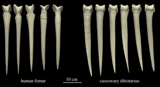 Three-dimensional reconstructions of each dagger examined in the study. (Dominy et al. 2018)