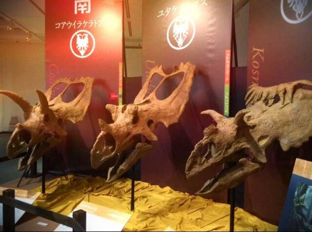 Three triceratops in a museum could be taken for mythical creatures like dragons