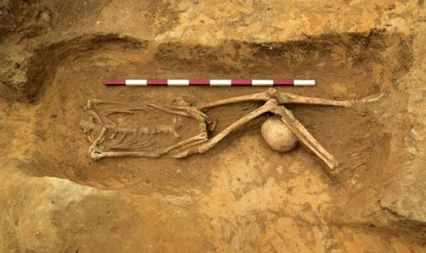 To find this many decapitated and oddly placed remains is unusual. (Archaeological Solutions)