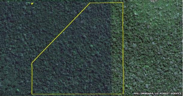 Traditional aerial imagery, where only treetops are visible.