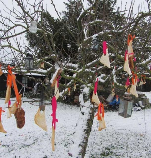 Tree decorated with bread and ribbon (Via author)