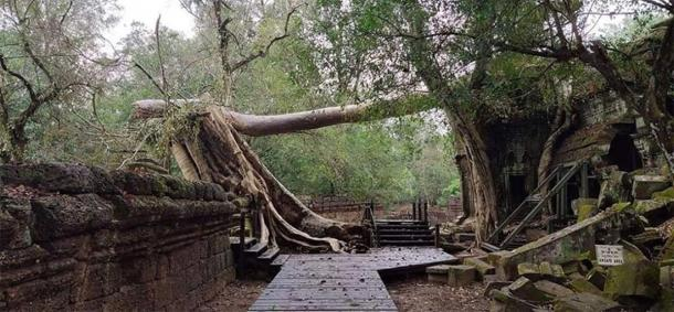 Trees collapsed at Angkor Wat temples due to strong winds. (Knongspor)