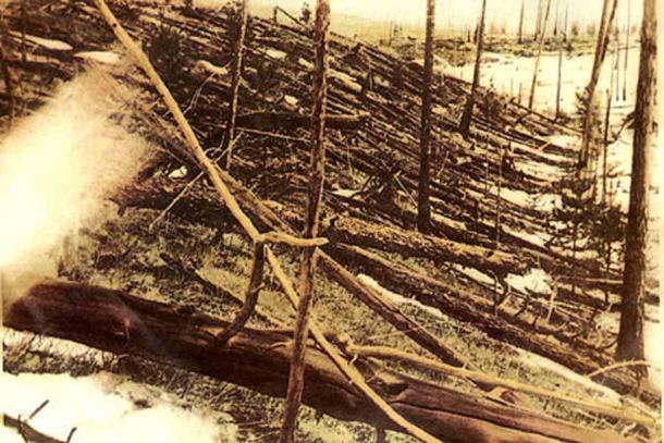 Trees knocked over by the Tunguska blast.