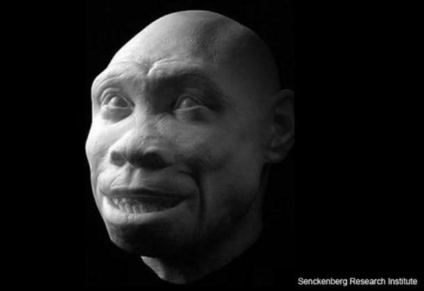 """Turkana Boy"" (Homo ergaster) was discovered in the fossil-rich Turkana Basin."