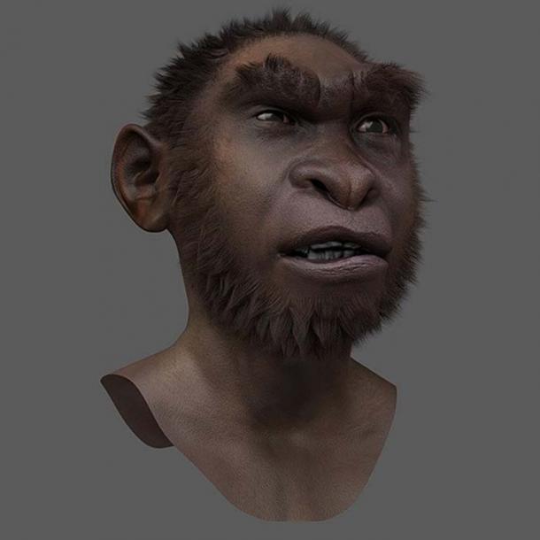 Turkana Boy - Forensic facial reconstruction/approximation. (Drbogdan / CC BY-SA 3.0)