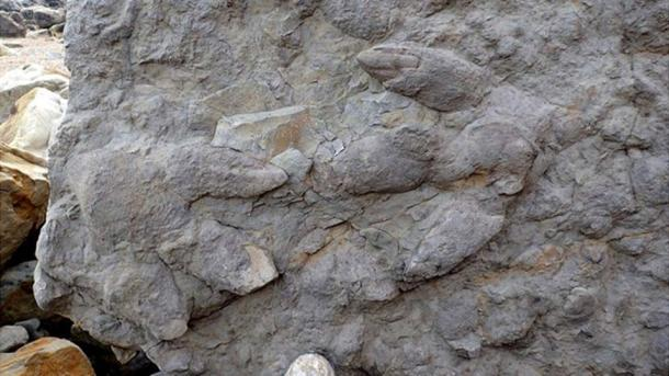 Two large Iguanodontian footprints with skin and claw impressions. (Neil Davies / University of Cambridge)