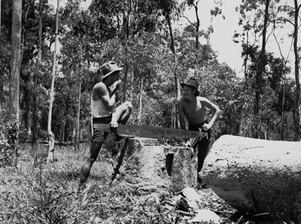 Two young men using a cross-cut saw on the St. Lucia Farm School, 1936. (Public Domain)