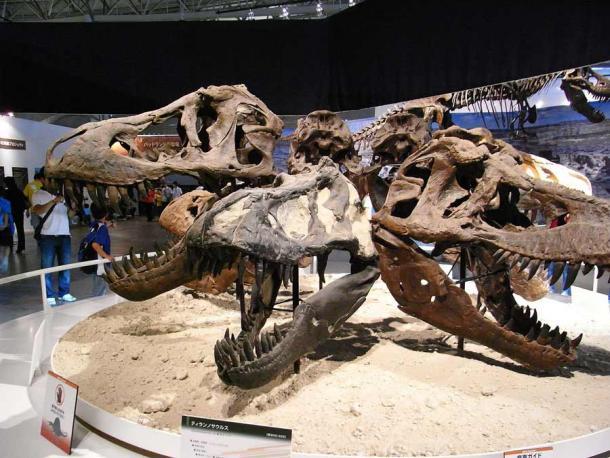 Una pantalla circular de cráneos de Tyrannosaurus rex. (Kumiko de Tokio, Japón / CC BY-SA 2.0)