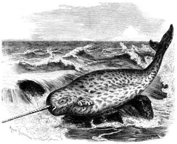Historical depiction of a narwhal from 'Brehms Tierleben' (1864–1869). (Public Domain)