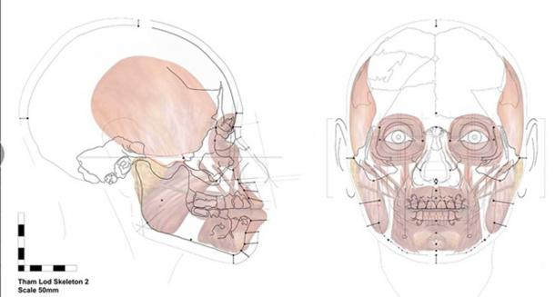 This image shows the facial approximation method of reconstructing the image of a person's face just from the skull.