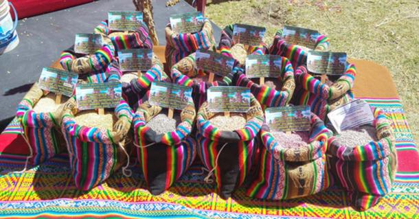 Varieties of quinoa on display in Peru