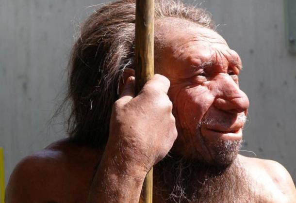 Wax model of a Neanderthal.