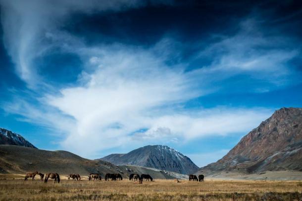 Wild horses grazing in Mongolian valley. (Image: Elizabeth via Fotolia)