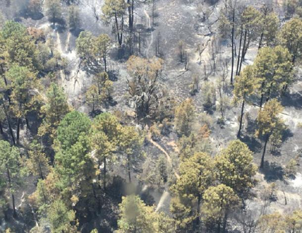 Woodbury Fire personnel report that mitigation efforts in the area of the Medusa Mother Tree were successful. (US Forest Service Tonto National Forest / Facebook)