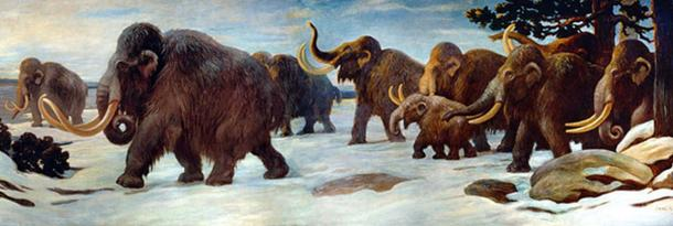 Wooly mammoths near the Somme River, AMNH mural. Public domain.