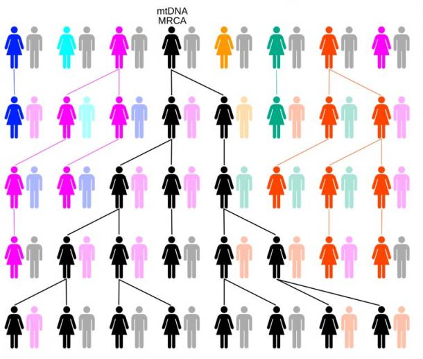 Y-chromosomal Adam and mitochondrial Eve were just the two out of thousands of people alive at the time with unbroken male or female lineages that continue on today. Example chart showing the evolution of mitochondrial DNA