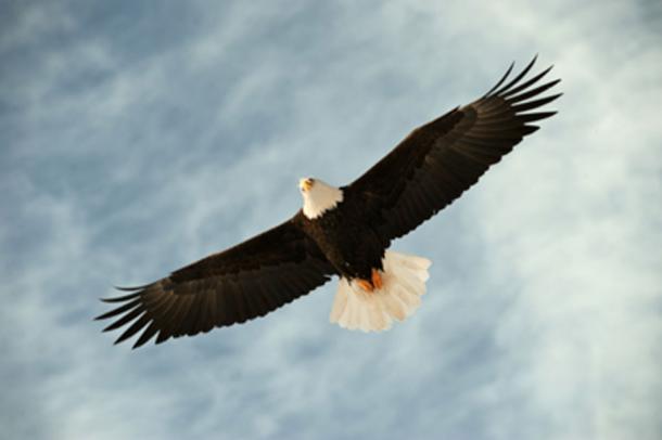 Zeus sends an eagle as a favourable omen to Priam. (Uryadnikov Sergey / Adobe Stock)