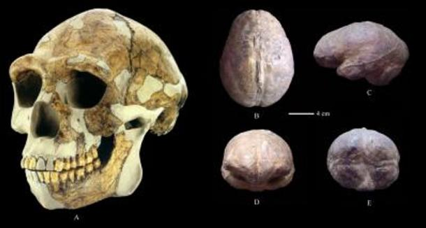 A reconstructed Zhoukoudian skull (A) and endocast (B: superior view; C: left lateral view; D: anterior view; E: posterior view).