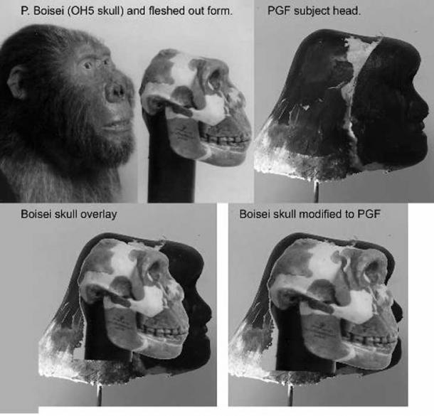 …a hominid with a skull like Paranthropus Boiseiand and a skeletal composition similar to the robust Neanderthals.