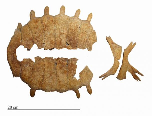 The top and bottom of a turtle shell (known as the carapace and plastron) from a burial at Kavuşan Höyük.