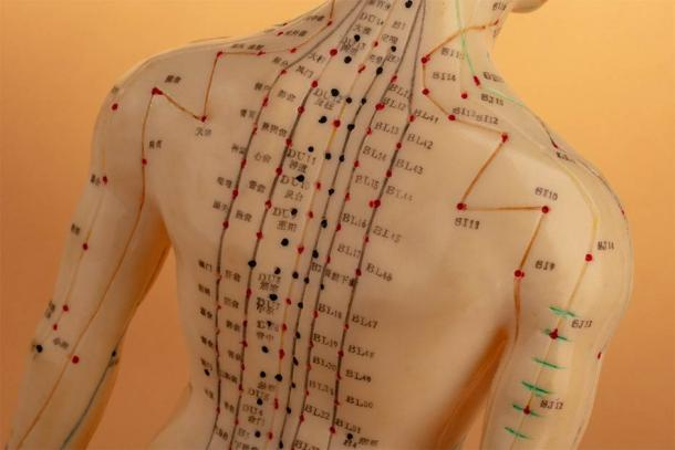 The major acupuncture meridian lines on the back of the human body (Birgit Reitz-Hofmann / Adobe Stock)