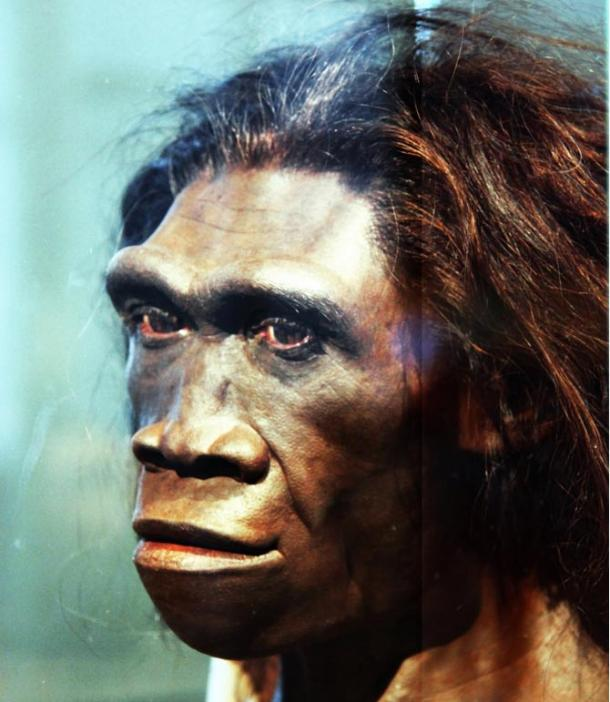 A model of the face of an adult female Homo erectus.