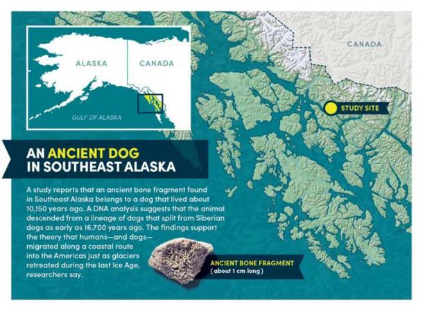 The ancient dog bone fragment and a map of the study area. (Bob Wilder / University at Buffalo)