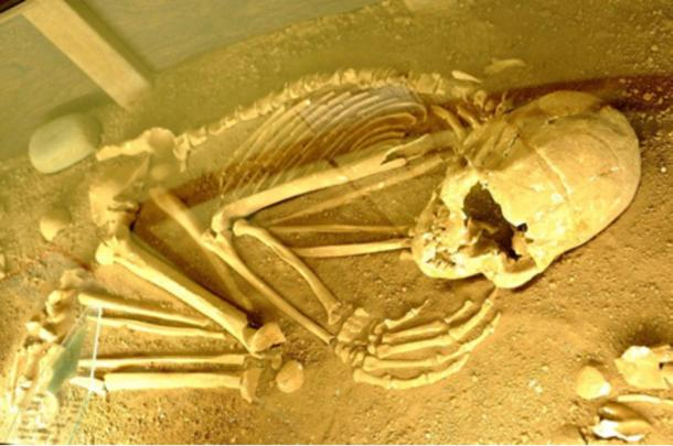 An ancient skeleton discovered in the region of Lagoa Santa in Brazil.