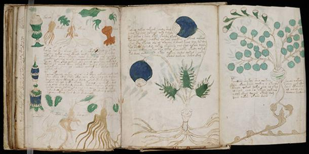 A page from the mysterious Voynich manuscript