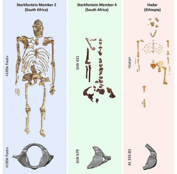 A comparative table of the three atlases found in the localities where three iconic Australopithecus specimens were found. Author supplied