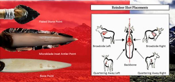 Wound ballistics on a reindeer.