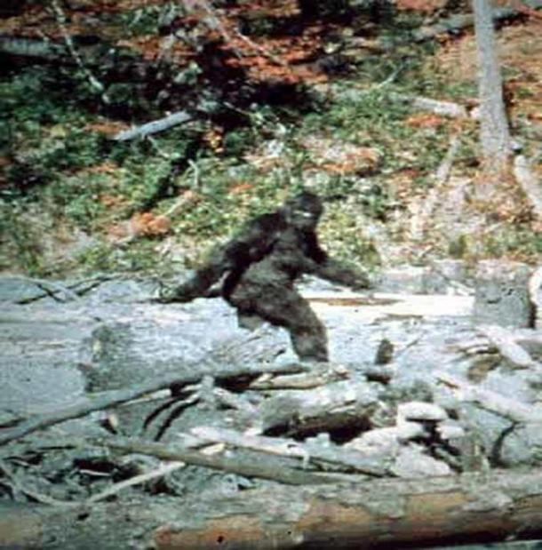 "Sighting from ""Patterson–Gimlin film frame 352"" by Patterson-Gimlin film. This is the familiar or popular face of Bigfoot."