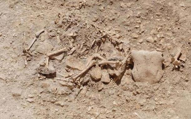 Excavation reveals bizarre Celtic burial with hybrid-animal bone arrangements