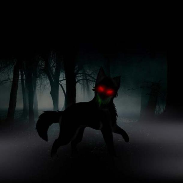 A black dog in the woods.