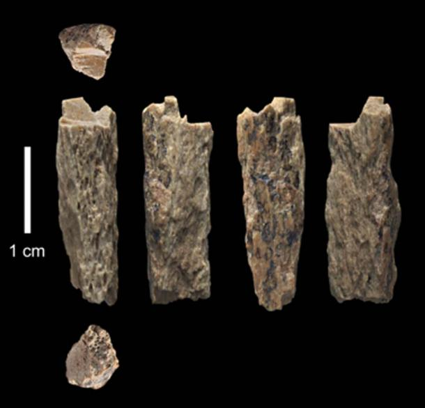 This bone fragment ('Denisova 11') was found in 2012 at Denisova Cave in Russia and represents the daughter of a Neanderthal mother and a Denisovan father. (T. Higham/ University of Oxford)