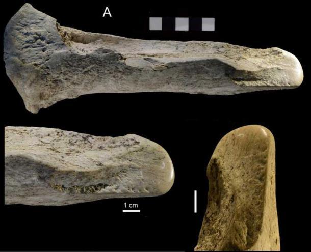 Tous les outils en os trouvés sur le site de Castel de Guido n'étaient pas en os d'éléphant.  La figure 14 de l'étude montre la pointe polie d'un os de taureau (un type de bovin sauvage), comparée à un ancien outil en os de cheval d'Allemagne (en bas à droite).  Ces outils sont connus sous le nom de lissoirs, que les anciens humains utilisaient pour traiter le cuir.  (un de plus)