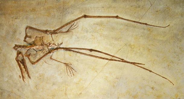 The fossilized bones of a pterosaur. (PixilRay / Adobe Stock)