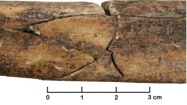 An ancient mass grave in Germany has revealed broken bones, such as this fractured adult human tibia.