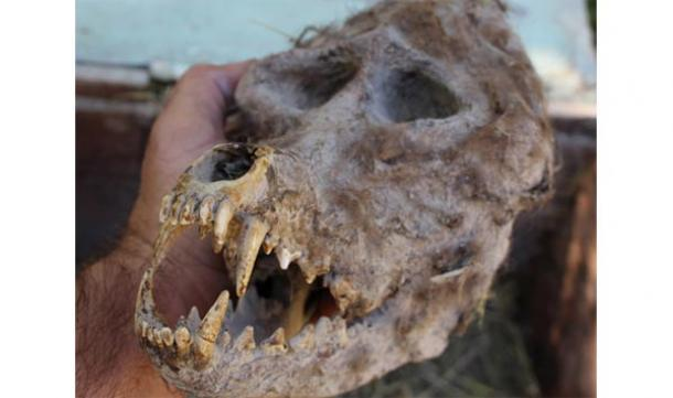 Bulgarian farmer discovers skull resembling werewolf in a sealed box