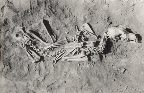 This dog was buried in a crouched or sitting position.