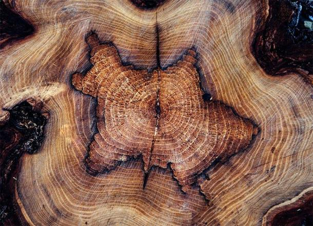 The carbon in a tree ring reflects when the tree was photosynthesizing and, therefore, taking carbon out of the atmosphere. (Pixabay License)