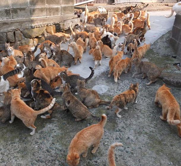 Some of the cats on Aoshima Island, also known as 'Cat Island', Japan.