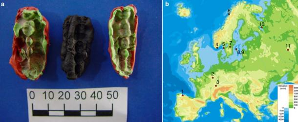 The studied material and its origin. a One of the chewing gums from Huseby Klev, (Fynd 2037), with two plastelina casts for each side. b The location of the sites, genomes from which were used in this study
