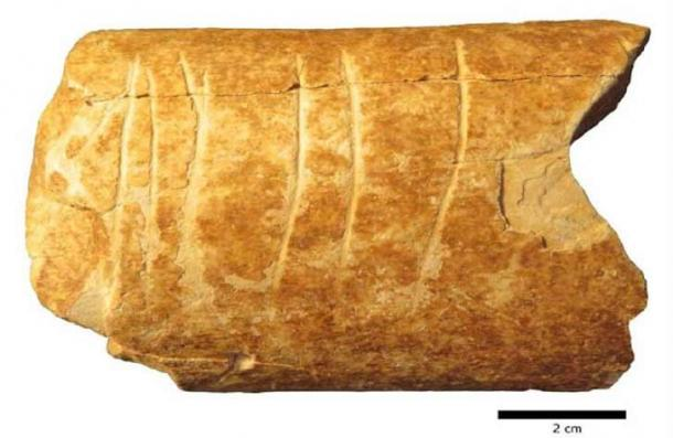 """The cleaned-up bone fragment found in Ramla, Israel, clearly showing the six manmade """"line"""" symbols carved into it. (Marion Prévost / Hebrew University of Jerusalem)"""